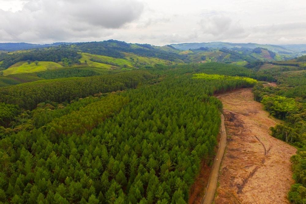 Progetti di riforestazione con PrintReleaf la stampa green che aiuta il Pianeta